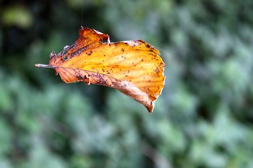 Hidden leaf line