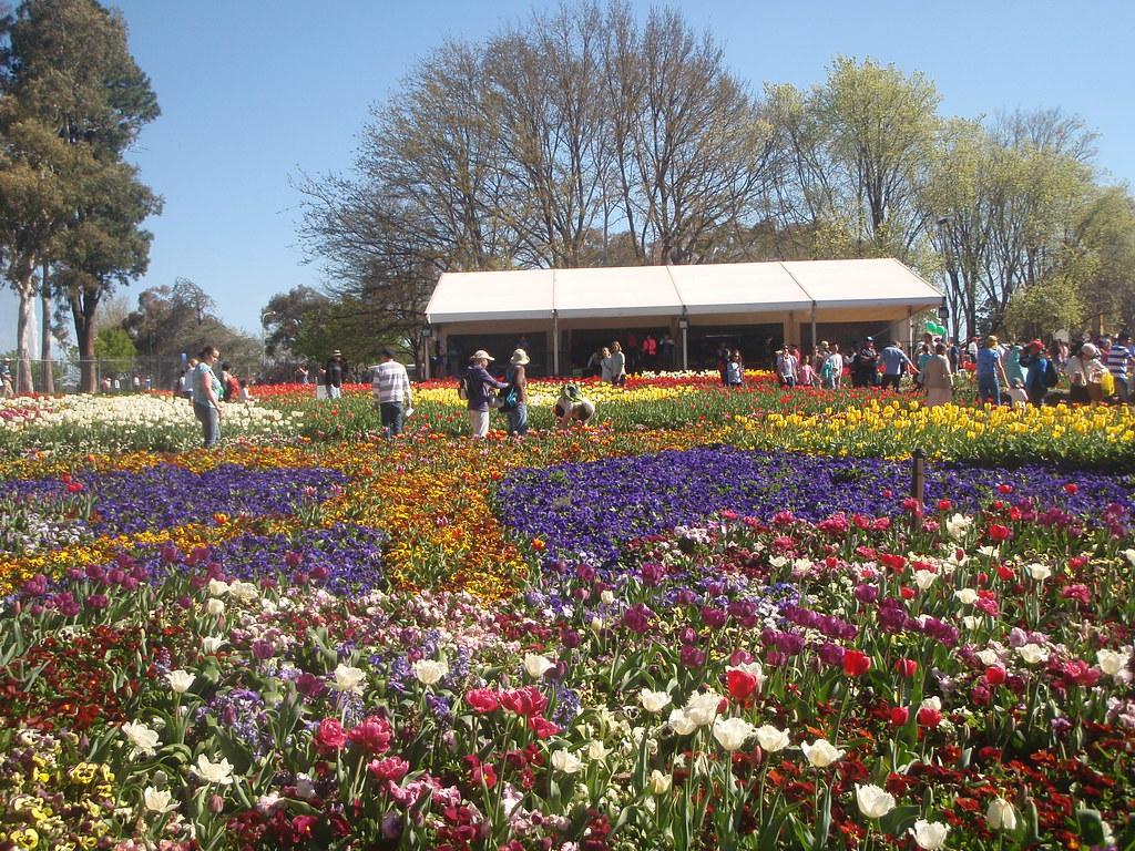 15362121286 fe0061261f b Australia's Grandest Spring Festival Celebrates 28th Year