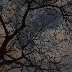 #Beautiful #sky #colors #noeffect #silhouette #natural #watercolor #tree #branches #artistic #nature #creativity #creativenature #instapic  #instagram #iphonogram #iphonography