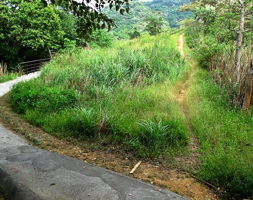 文山區猴山岳步道。(圖片來源:台灣千里步道協會)