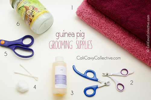 Guinea pig grooming supplies