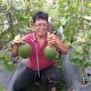 Melon hamikwa