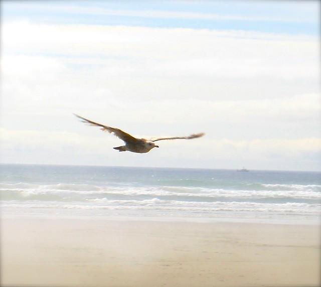 Bird at the Beach 2