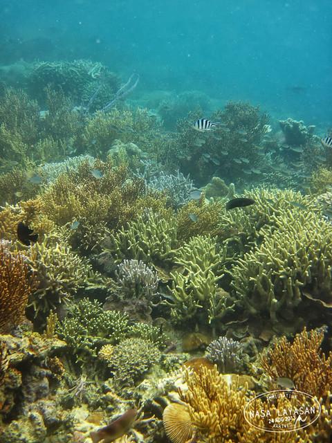 coralgarden5