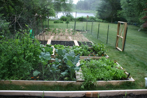 vegetable garden by the pond