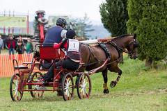 pack animal(0.0), cart(0.0), vehicle(1.0), coachman(1.0), horse(1.0), horse harness(1.0), horse and buggy(1.0), carriage(1.0),