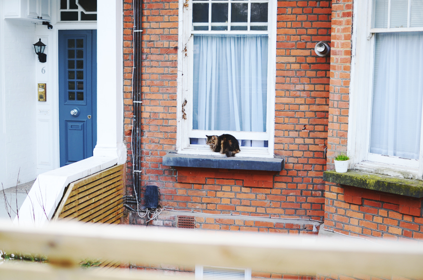 11 hampstead cat