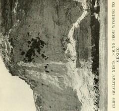"""Image from page 484 of """"Through the Grand Canyon from Wyoming to Mexico, with a foreword by Owen Wister;new edition with (72 plates) from photographs by the author and his brother"""" (1915)"""