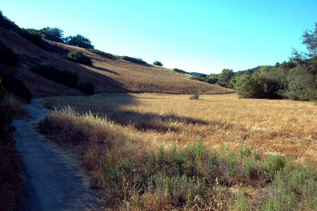 Coyote Run