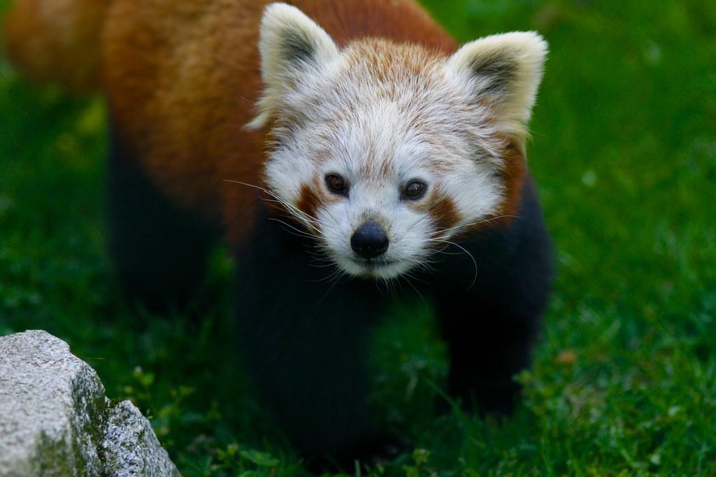Zoo Linz M Ecker Flickr