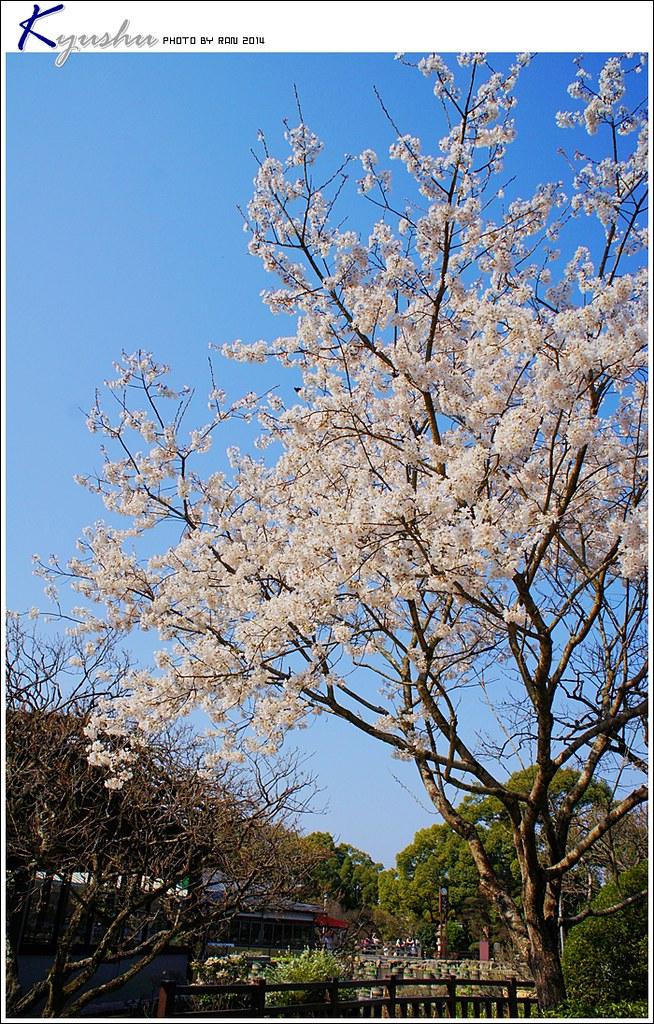 kyushu20140323014
