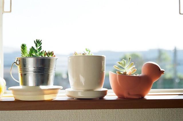 140722_Plant 3