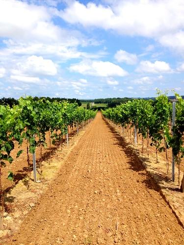 The Vines of Bergerac