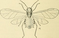 """Image from page 241 of """"Manual of vegetable-garden insects"""" (1918)"""