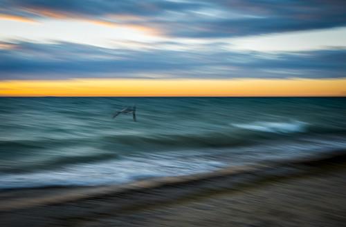 sunset summer vacation abstract blur bird leland nikon waves michigan flight lakemichigan shore happyaccident d800 1635mm fav100 fav200 fav300 10000v nikond800 fav400
