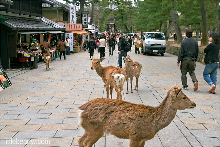 奈良公園-33