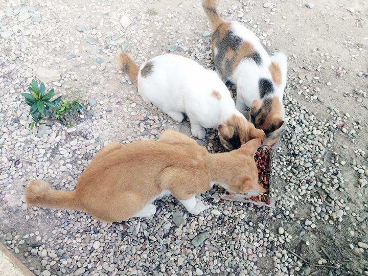kitten batam indonesia