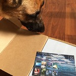 Checking out the package that just arrived. #ondinequartet #bookswag #yalit #dogs #dogstagram #germanshepherd #bookswag