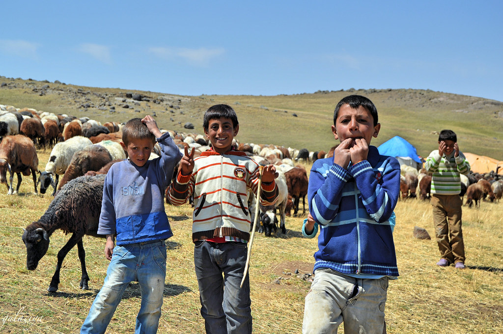 Agirî plateau. Child shepherds