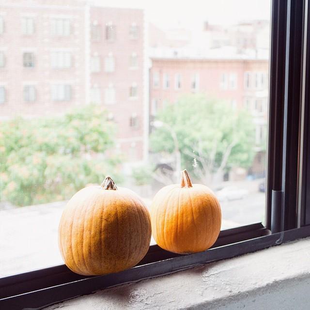 Picked some pumpkins from the garden, now giving them a view of Brooklyn.  #pumpkins #pumpkin #vegetablegarden #rooftop #NYC #Brooklyn #vegetables #healthyeating #garden #gardening #urbanfarming #urbangarden #containergarden #harvest #gardenchat #farmgirl