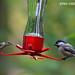 Unlikely bird friends! by WhiteEye2