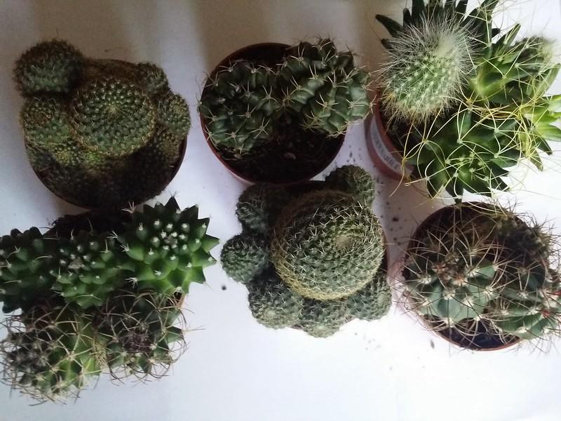 Cactus y suculentas en verdecora en madrid for Verdecora madrid