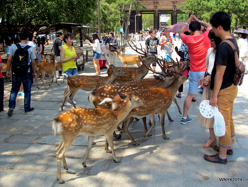 Feeding the Deers
