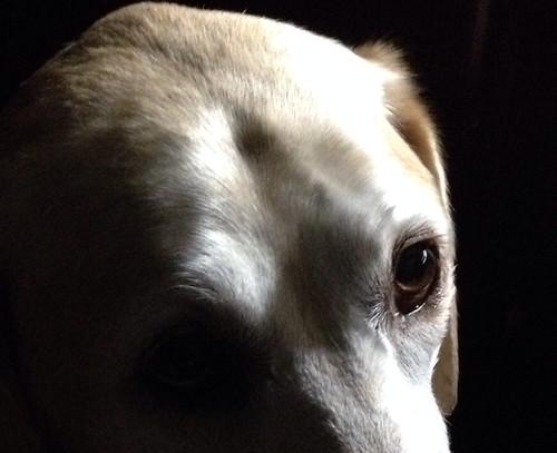 Abby's intelligent eyes