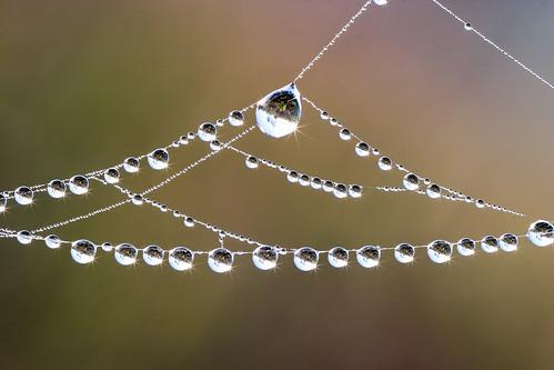 大熱天的清晨,蜘蛛網上凝結的水珠,透露了生物天生具備收藏水源的能力,而人類呢?圖片來源:Matthew Paulson onFlickr