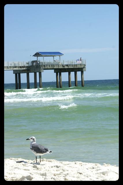 bird & pier
