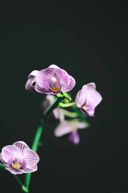 Orchids | A Brown Table