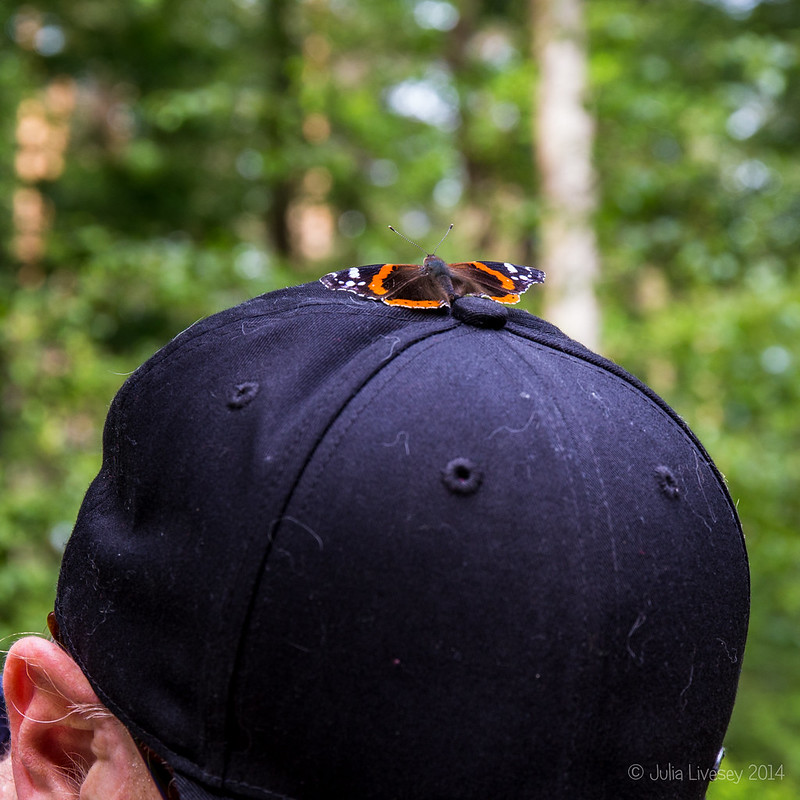 Red Admiral on Chris' baseball cap