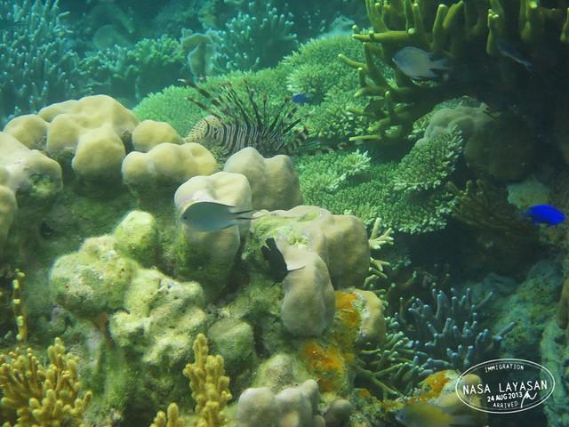 coralgarden4