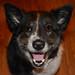 Happy Puppy by Dancing Bohunk