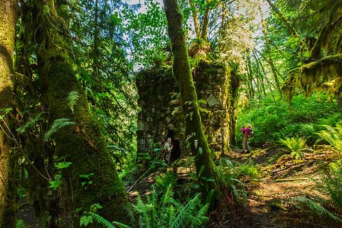 trees writer limekiln snohomishcounty limekilntrail karensykes robecanyonhistoricalpark