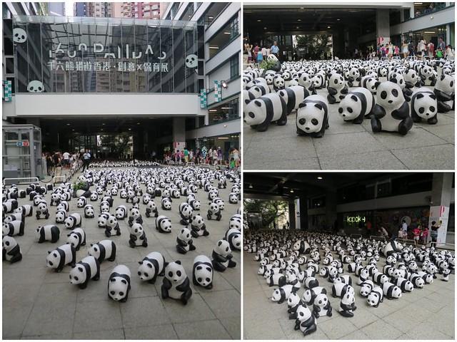 1600 pandas1