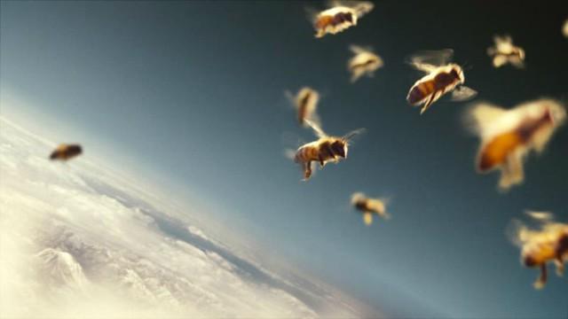 1_einstein abejas diarioecologia.jpg