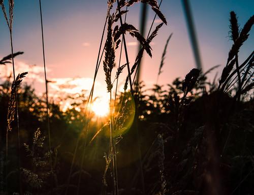 187 // Suburban Sunset