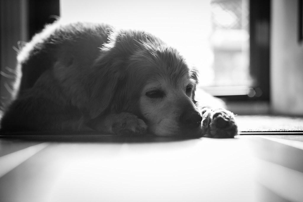 197/365 Guard Dog