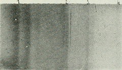 "Image from page 498 of ""The Bell System technical journal"" (1922)"