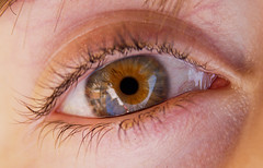 iris, brown, skin, eyelash, close-up, eye, organ,