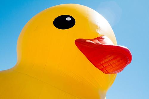 duck40