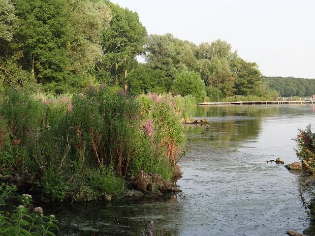 Flickr the kralingen lake kralingse bos pool - Bos lak ...