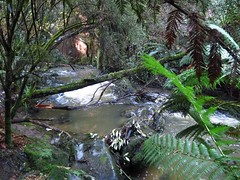 2014-08-10 Lilydale Falls 060 - Second River