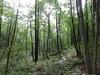 ベルツの森 朝の森林浴散歩