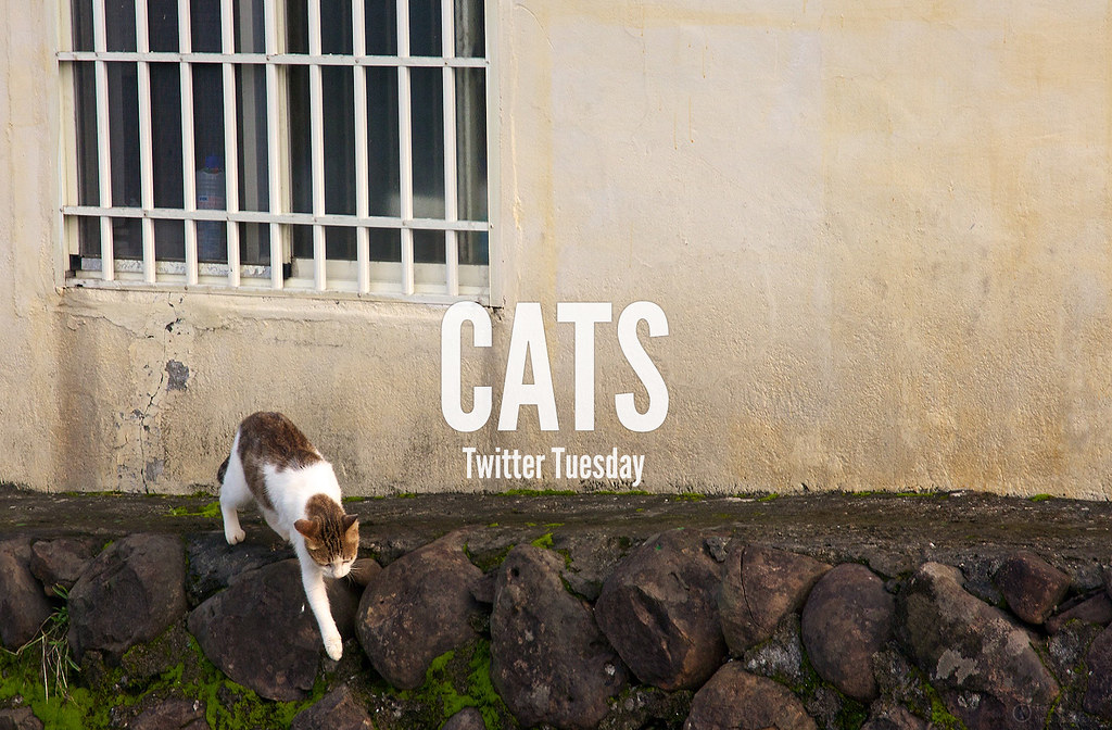 TwitterTuesday: Cats