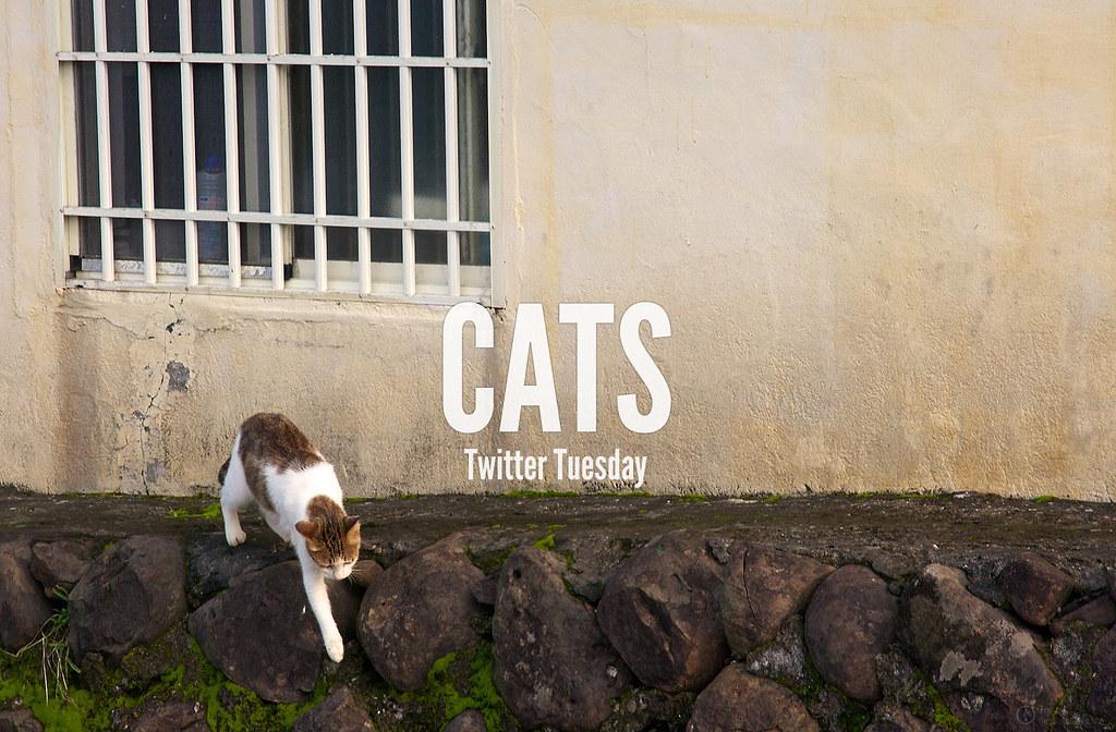 TwitterTuesday: Cats
