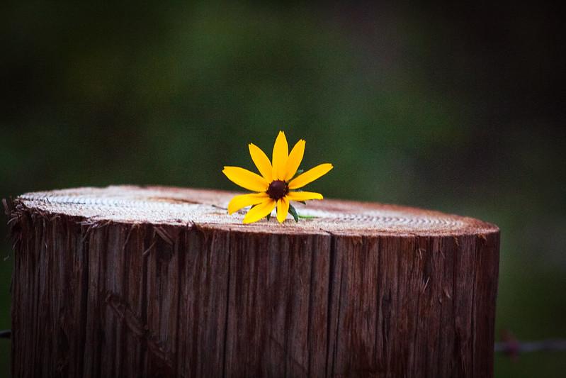 flowerfive