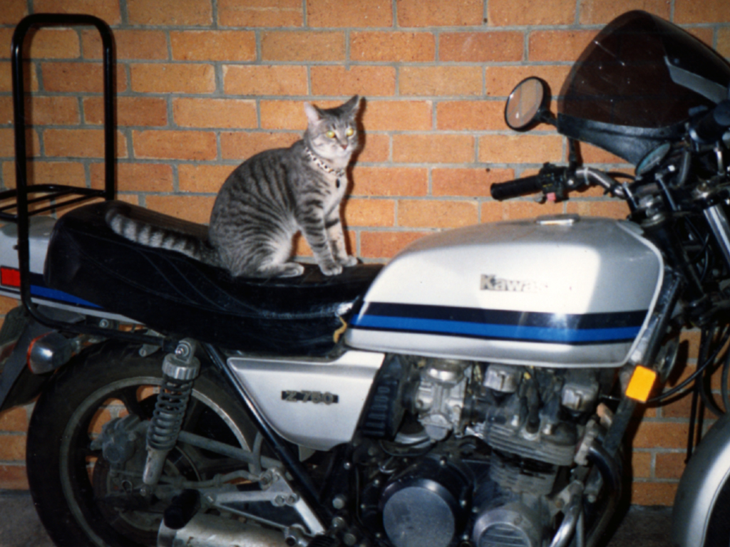 smoggy on a motorbike