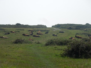 14 09 06 Day 9 - 10 Cows